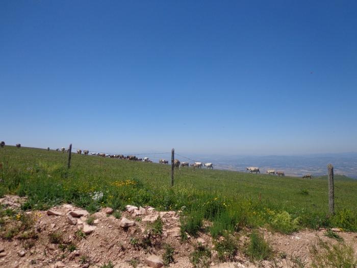 ridge subasio