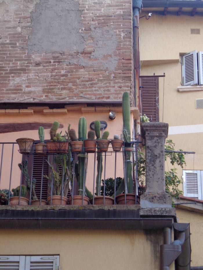 Balcony with cacti Perugia